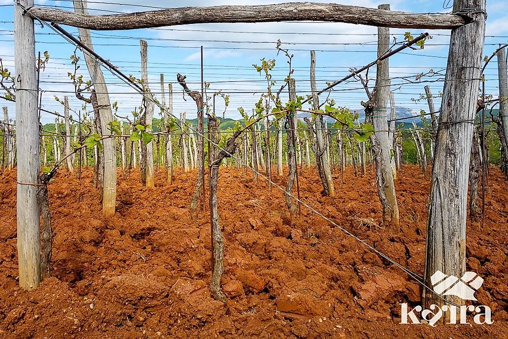 Karstweingarten mit roter Erde