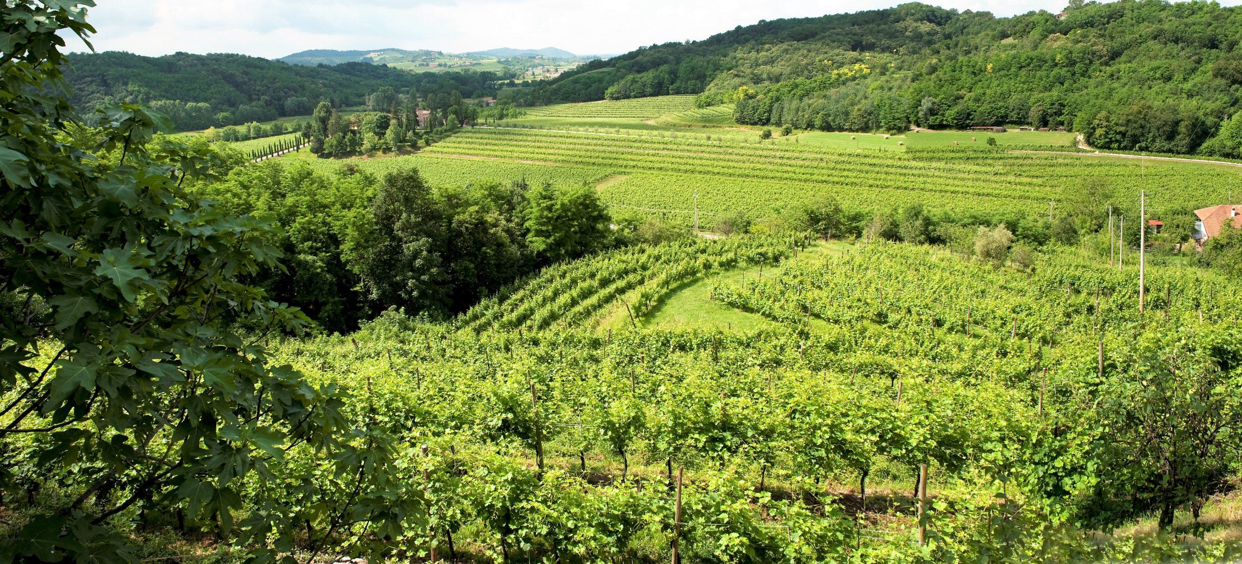 Blick übers Weinland
