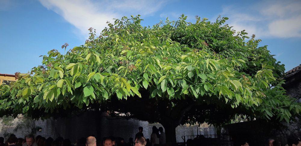 Osmiza mit Baum