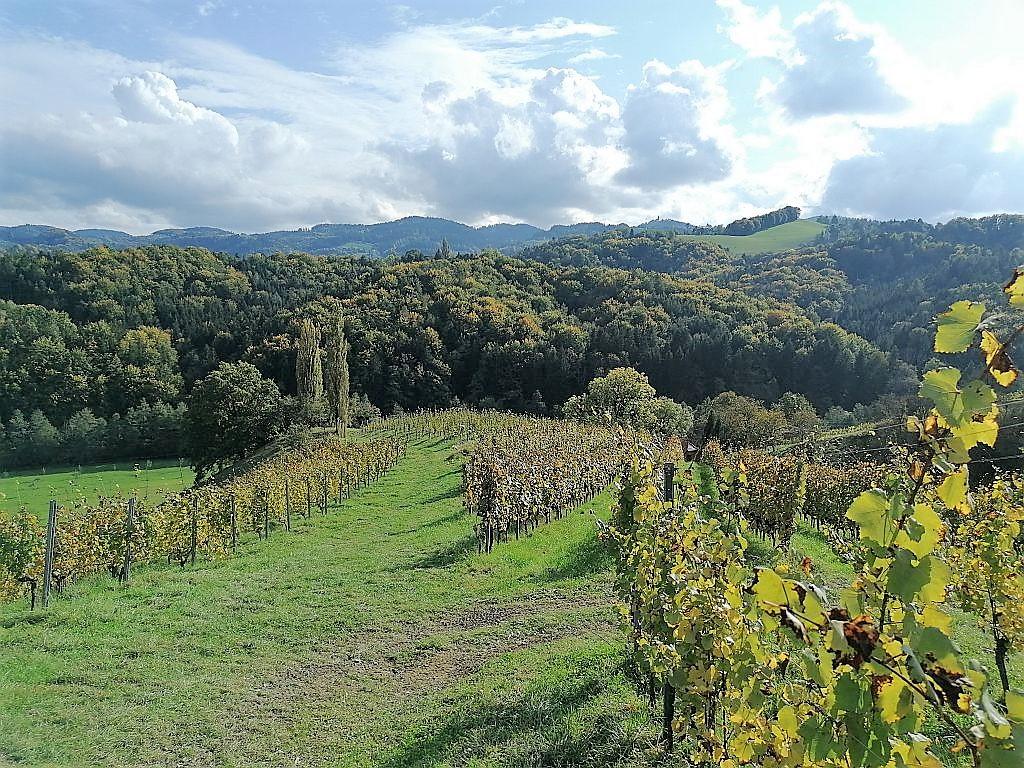 Blick Weingut Tauss Richtung Slowenien